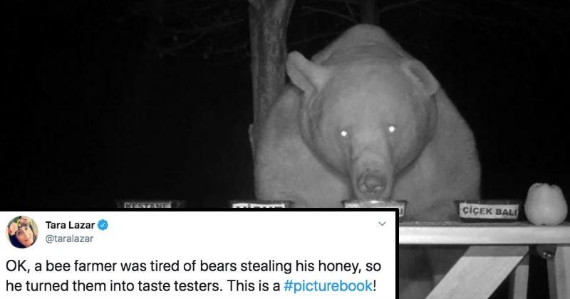 Beekeeper tired of bears always stealing his honey turns them into taste testers.