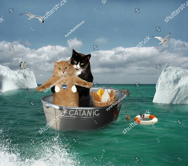 stock photo - Cat - K shutterstsc Iryna Kuznetsova utterst ck*y Iryfla Kuznetsove shuttersts shutterstsck shutterstock CATANIC nynaKiznetsova shutter stae shutterssk