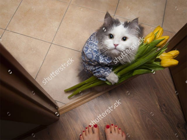 stock photo - Cat - shutterstsck shuttersteck shutterstsck