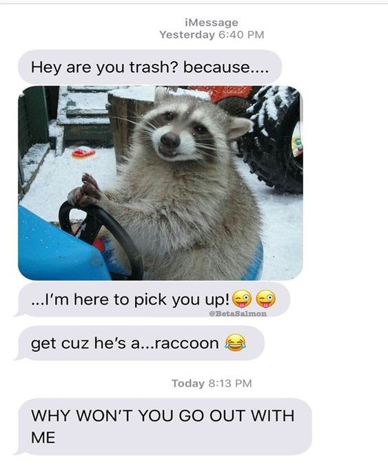 Photo caption - iMessage Yesterday 6:40 PM Hey are you trash? because.... .I'm here to pick you up! eBetaSalmon get cuz he's a...raccoon Today 8:13 PM WHY WON'T YOU GO OUT WITH ME