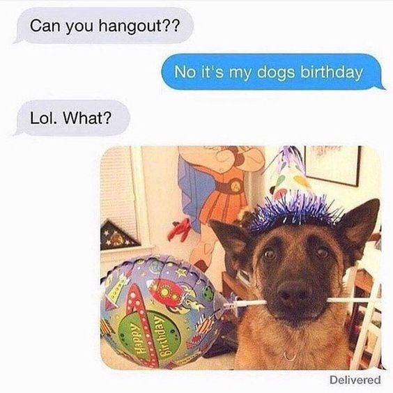German shepherd dog - Can you hangout?? No it's my dogs birthday Lol. What? Delivered Happy Birthday