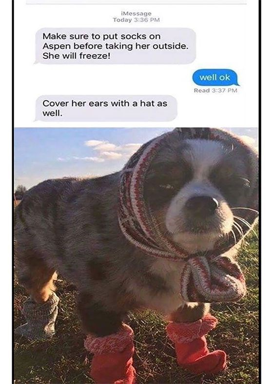 Vertebrate - iMessage Today 3:36 PM Make sure to put socks on Aspen before taking her outside. She will freeze! well ok Read 3:37 PM Cover her ears with a hat as well.