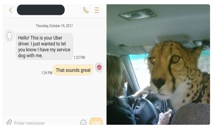Felidae - Thursday,October 19,2017 Hello! This is your Uber driver. I just wanted to let you know I have my service dog with me. 1:22 PM 1:24 PM That sounds great Enter message SEND 11