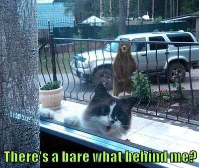 Cat - There's a bare what behind me?