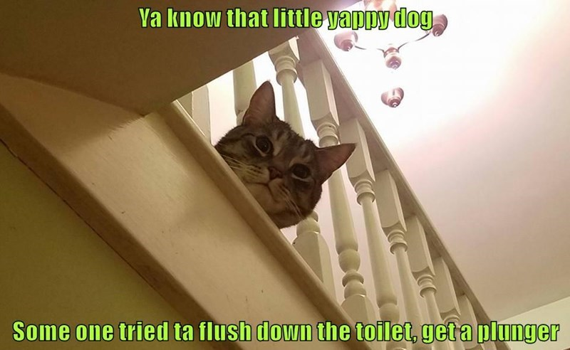 Cat - Va know that little yappy dog Some one tried ta flush down the toilet, get a plunger