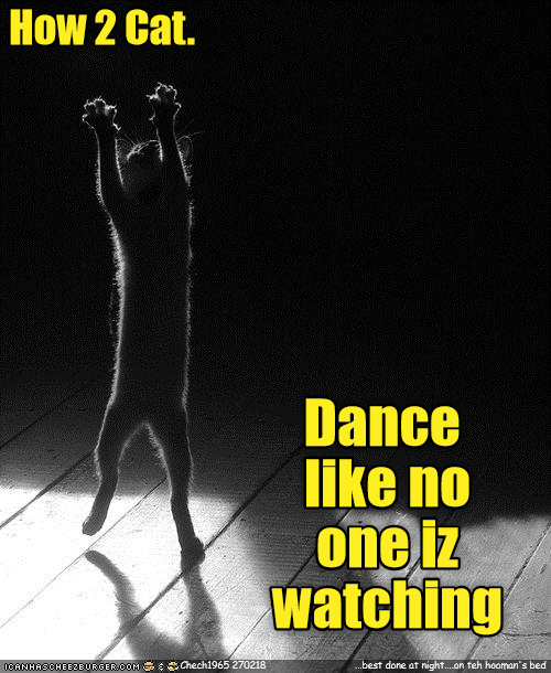 Photo caption - How 2 Cat. Dance like no one iz watching ...best done at night....on teh hooman's bed Chech1965 270218 00ANHASOHEEZBURGER 0o