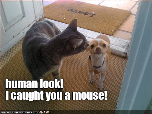 Cat - human look! i caught you a mouse! ICANHASCHEEZEURGER.OOM