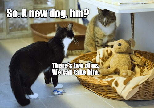 Cat - So.A new dog, hm? There's twoof us We can take him
