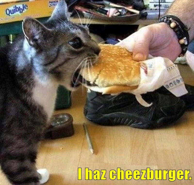 Cat - Quibble I haz cheezburger.