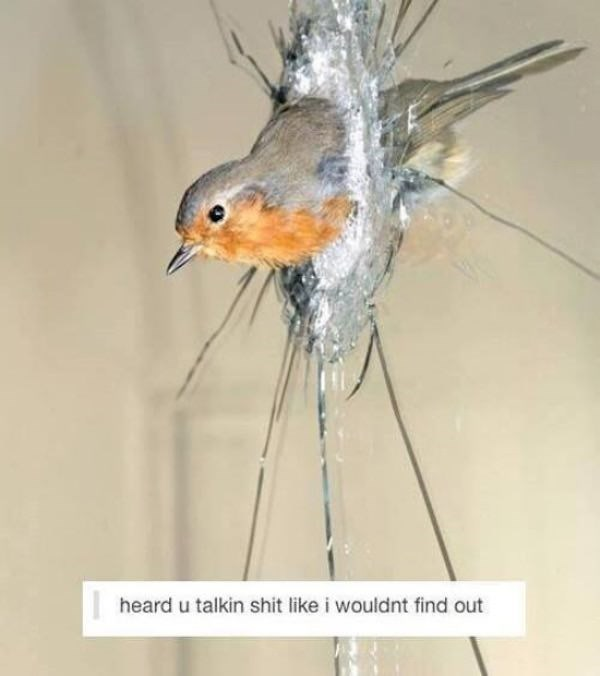 European robin - heard u talkin shit like i wouldnt find out