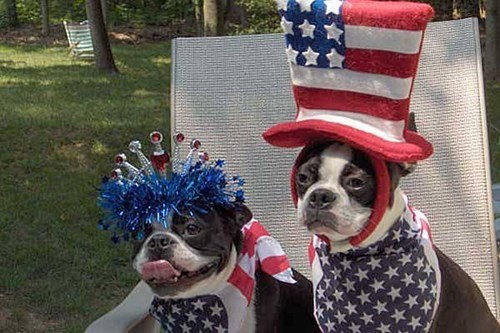 pets hats cute holiday fourth of july costume america - 91397