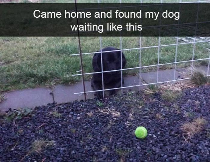 Soil - Came home and found my dog waiting like this