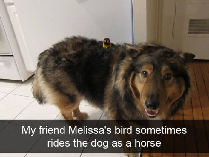 Mammal - My friend Melissa's bird sometimes rides the dog as a horse