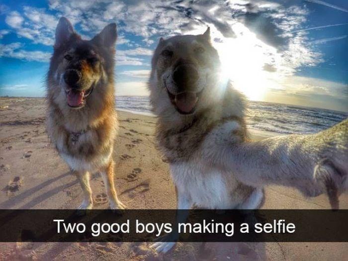 Vertebrate - Two good boys making a selfie