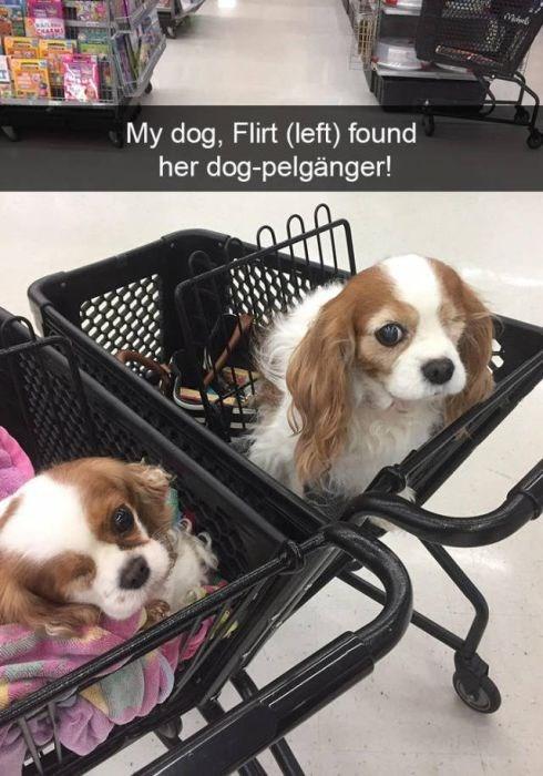 Dog - CHASM My dog, Flirt (left) found her dog-pelgänger!