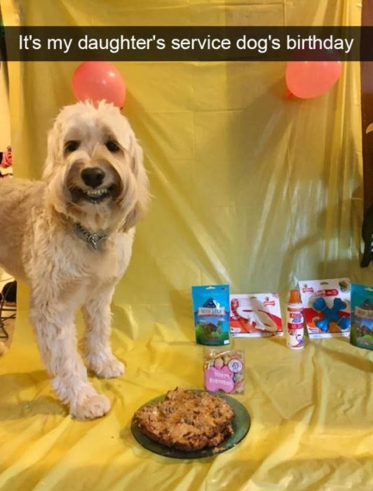 Dog - It's my daughter's service dog's birthday