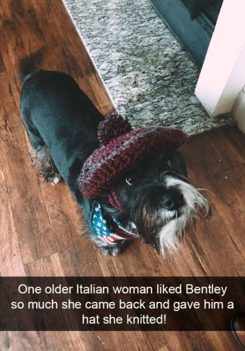 Dog breed - One older Italian woman liked Bentley so much she came back and gave him a hat she knitted!