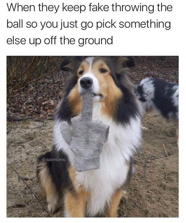 sunday meme of a dog holding a glove in its mouth by the middle finger