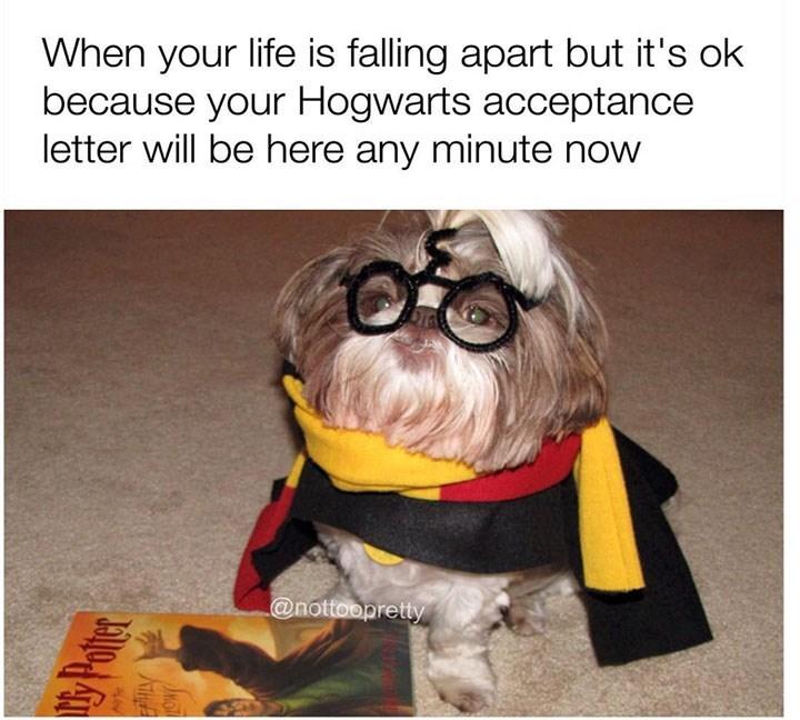 sunday meme of a dog wearing a Harry Potter costume