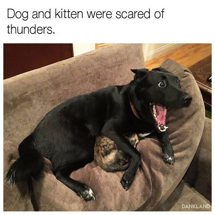 Sunday meme a dog and cat that are cuddling together because of thunder