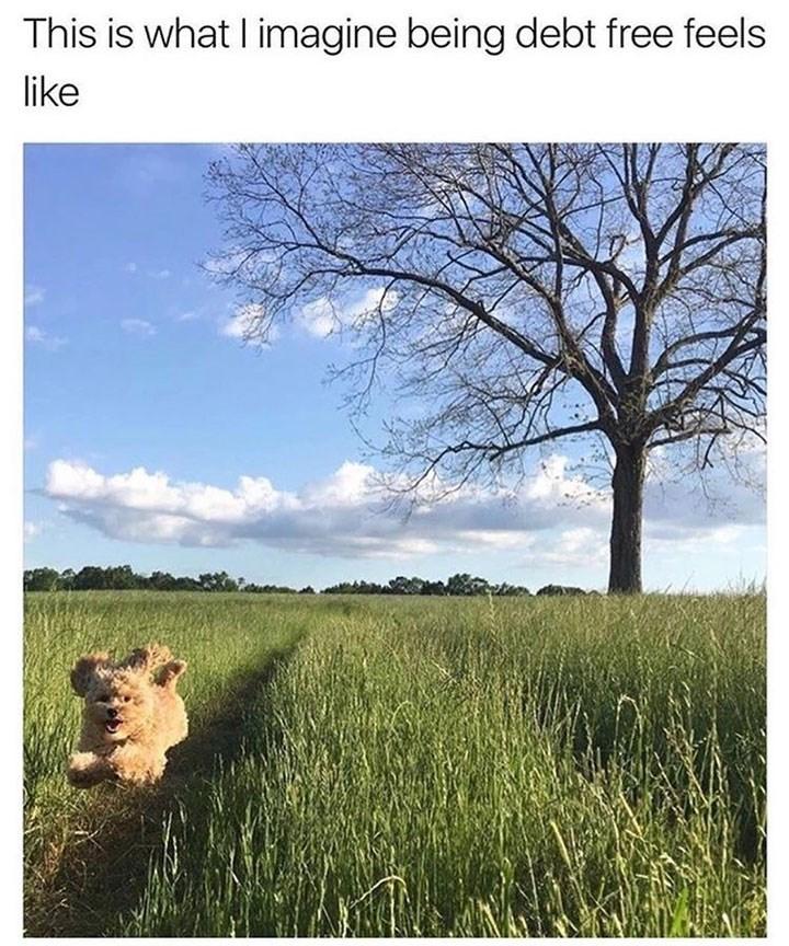 sunday meme of a dog running through a field of grass