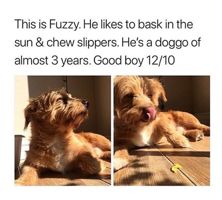 sunday meme of a dog sitting in the suns rays