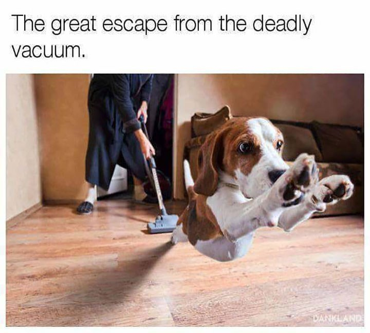 sunday meme of a dog leaping away from a vacuum