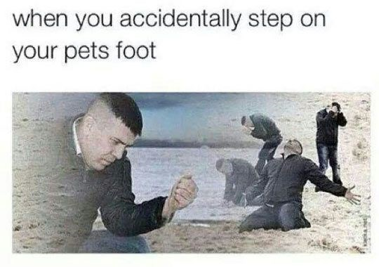 Text - when you accidentally step on your pets foot
