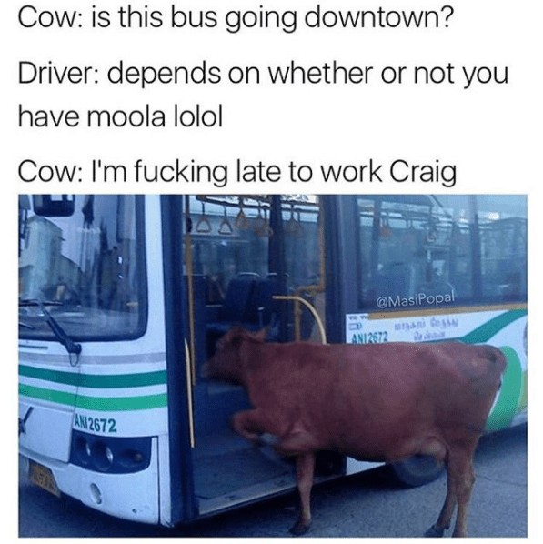 Transport - Cow: is this bus going downtown? Driver: depends on whether or not you have moola lolol Cow: I'm fucking late to work Craig @MasiPopal ANI 2672hA AN 2672