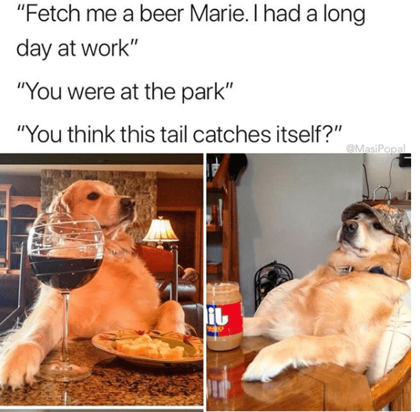"""Pet food - """"Fetch me a beer Marie. I had a long day at work"""" """"You were at the park"""" """"You think this tail catches itself?"""" @MasiPopal"""