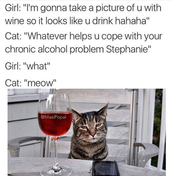 """Cat - Girl: """"I'm gonna take a picture of u with wine so it looks like u drink hahaha"""" Cat: """"Whatever helps u cope with your chronic alcohol problem Stephanie"""" Girl: """"what"""" Cat: """"meow"""" @MasiPopal"""