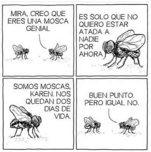 cuando una mosca macho no quiere aceptar una relacion de la mosca hembra