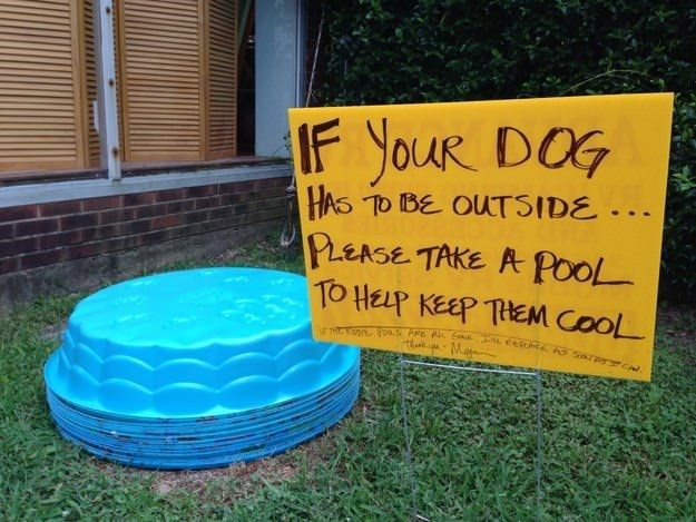 Water - IF YOUR DOG HAS TO IBE OUTSIDE.. PLEASE TAKE A POOL TO HELP KEEP THEM COOL maNnToS PRE PL E L cetcec A aTP CN ThnkpMay