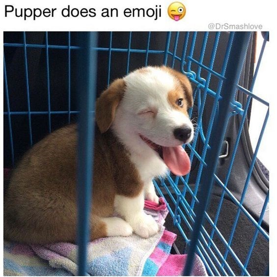 happy meme of a puppy winking and sitting in a cage