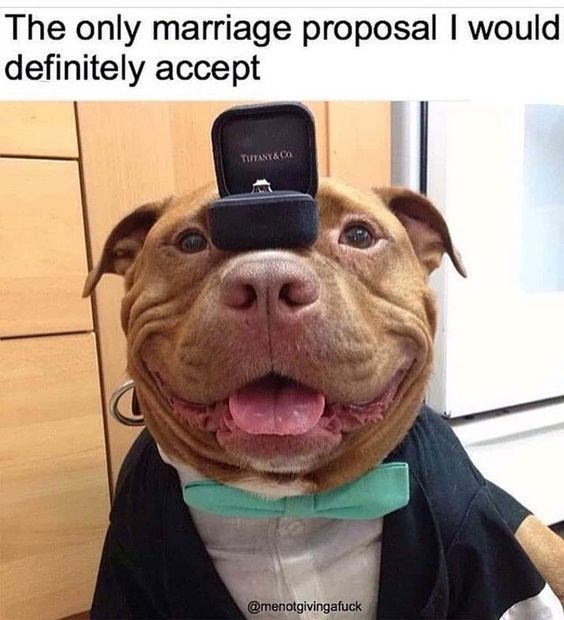 happy meme of a dog wearing a suit and holding a ring balanced on its nose