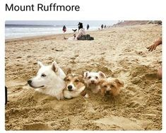 happy meme of four dogs covered in sand except their heads and looking like mount rushmore