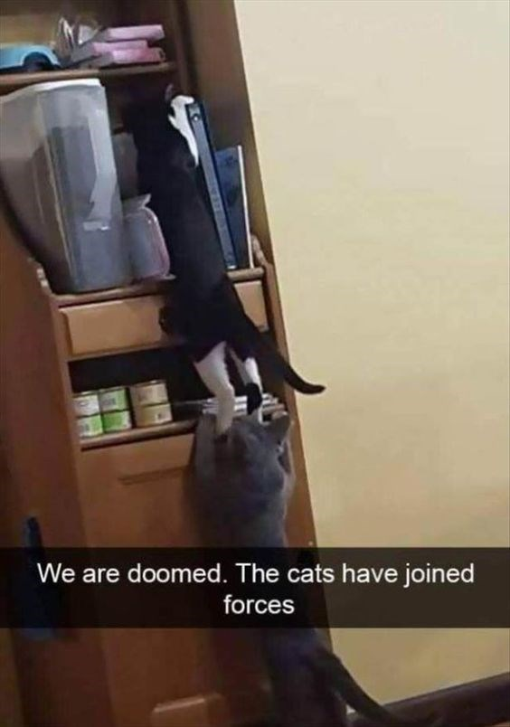 happy meme of cats using each other to climb up a shelf