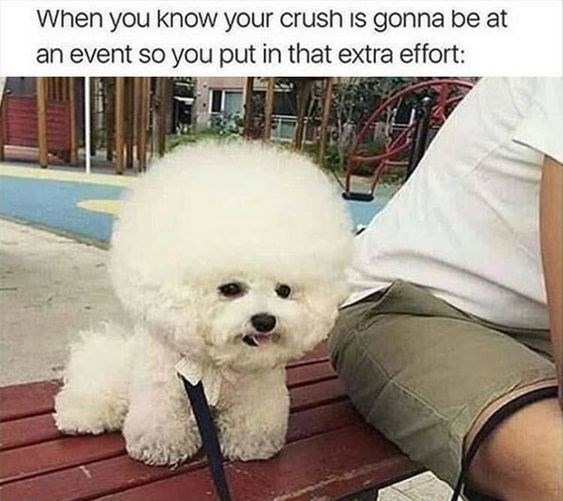 happy meme of a dog with puffy fur on its head