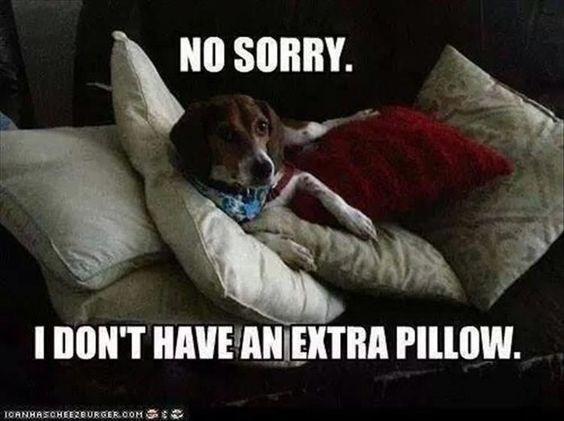 happy meme of a dog sitting among many pillows