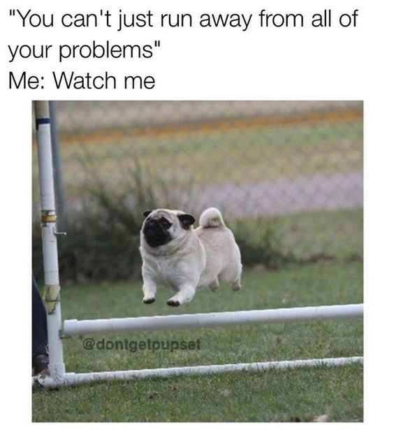 happy meme of a pug jumping over a fence