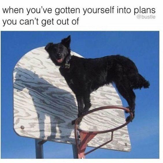happy meme of a dog balancing on basketball hoop