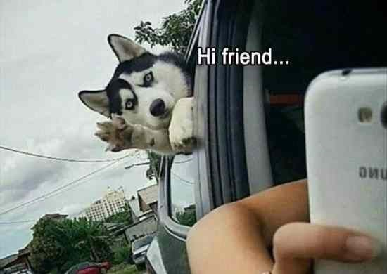 happy meme of a dog sticking out it head from a car and waving its paw