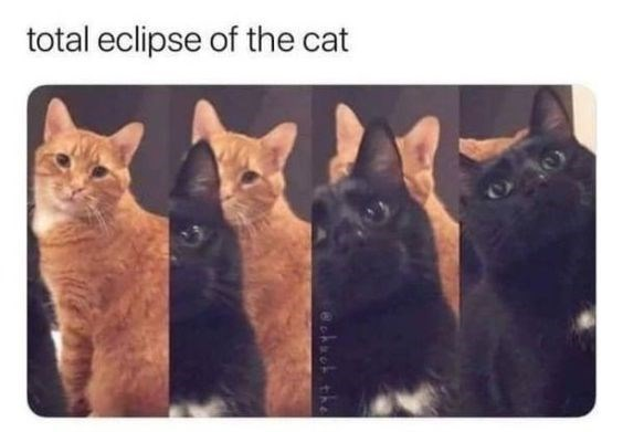 happy meme of a golden coat and black coat slowly covering the golden cat to look like an eclipse