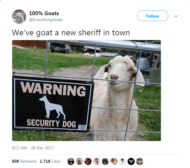 Livestock - 100% Goats Follow @EverythingGoats We've goat a new sheriff in town WARNING SECURITY DOG 9:13 AM - 28 Dec 2017 508 Retweets 1,716 Likes