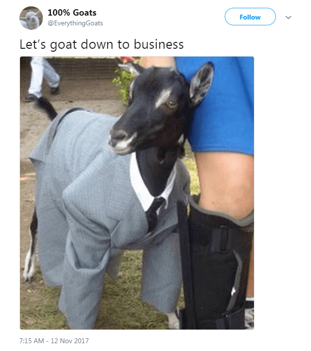 Italian greyhound - 100% Goats Follow @EverythingGoats Let's goat down to business 7:15 AM - 12 Nov 2017