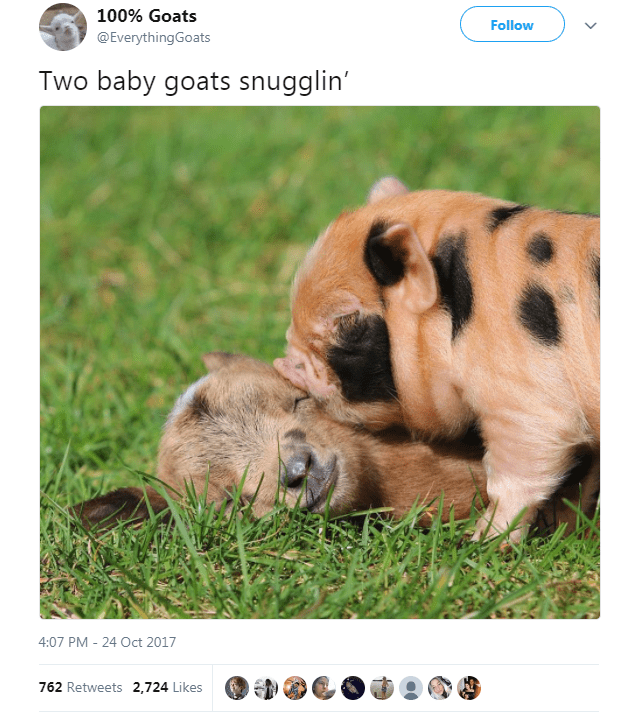 Wildlife - 100% Goats Follow @EverythingGoats Two baby goats snugglin' 4:07 PM - 24 Oct 2017 762 Retweets 2,724 Likes
