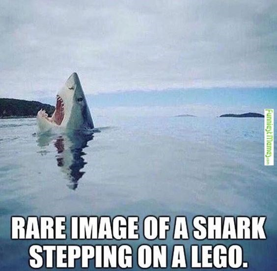 Fish - RARE IMAGE OF A SHARK STEPPING ON A LEGO. Funniest memey.com