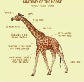 Giraffe - ANATOMY OF THE HORSE Nequus Ferus Giraffa BONCE NECK STILL NECK BIT MORE NECK HOLD ON IS THIS WHERE THE PILOT SITS? LINDA THIS IS THE WRONG DIAGRAM OH ACTUALLY, THIS LOOKS A BIT MORE SENSIBLE WHAT THE HELL THERE'S FOUR MORE NECKS DOWN HERE LINDA LINDA HELP