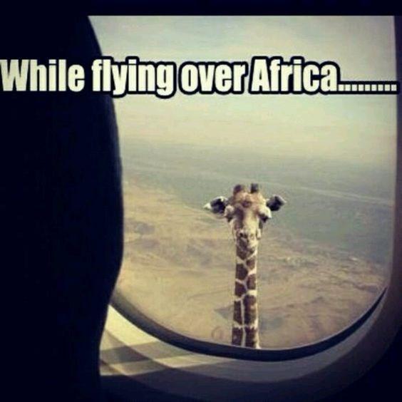 Giraffe - While flying over Africa..