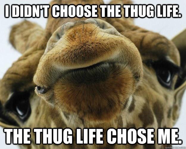 Mammal - ODIDNT CHOOSE THE THUG LIFE THE THUG LIFE CHOSE ME quickmeme.com
